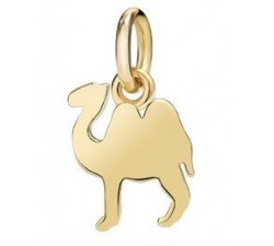 cammello piccolo